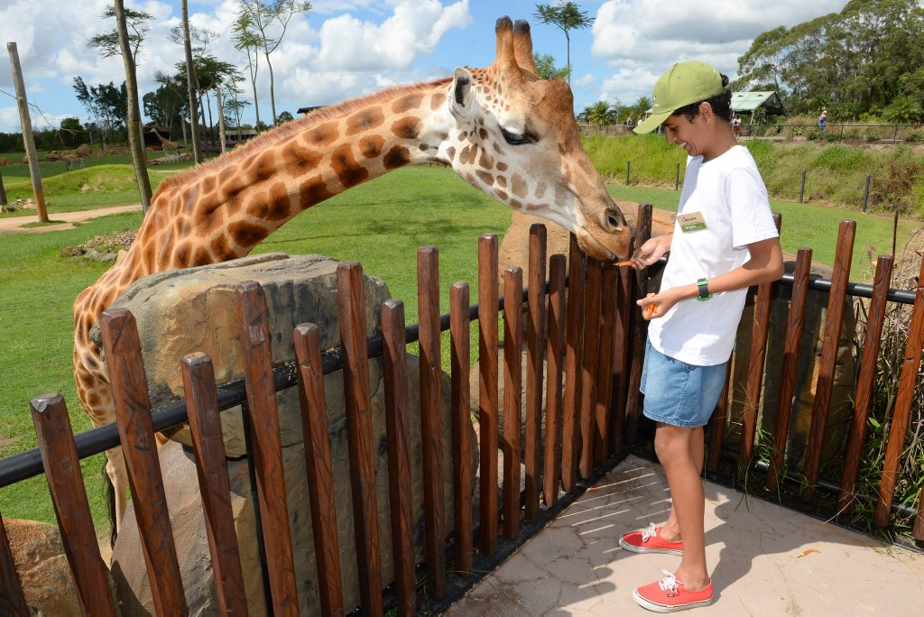 Josaia Bruinsma gets involved in the Zoo Keeper for a Day program at Australia Zoo. Photo Contributed