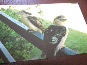 AUDIO: Tanyalla Recreational Centre wildlife