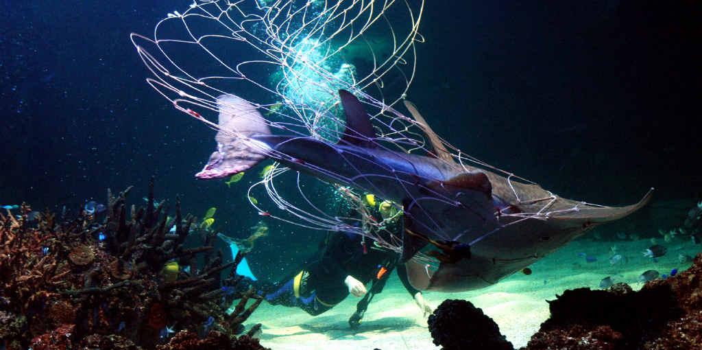 Nets, culls, tags won't reduce shark attacks, expert warns