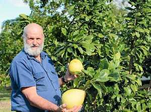 In my garden: Retired farmer loves his fruit and veg