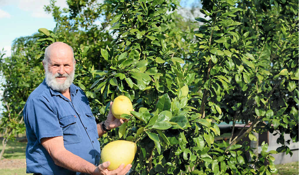David Williams has a range of fruit trees in his garden.