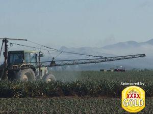 I am Queenslander: The pineapple farmers