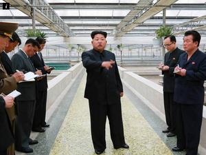 Kim Jong-un reportedly executes manager of terrapin farm