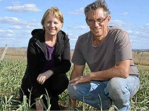 Garlic farming a career change for Kambouris