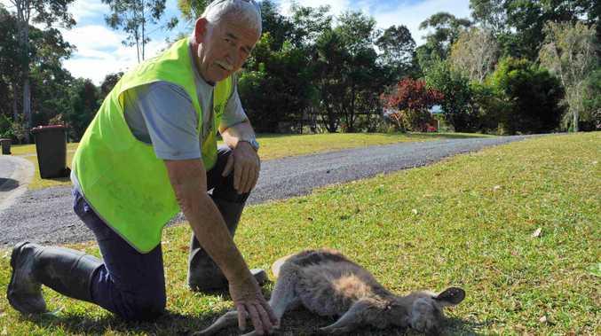 WIRES volunteer Martin van Bokhoven responded to the injured animals.