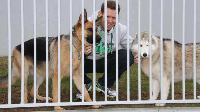 Don T Let Dogs Noses Poke Out Of Fence Council Demands