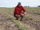 Chickpea famer Nic Clapham on his property at Cecil Plains where they are growing 360 hecatres of chickpeas. Contributed