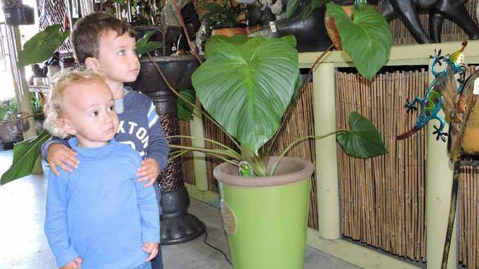 Young gardeners Lochie (back) and Cooper Biggin look at plants at Calligan's Nursery and Garden Centre