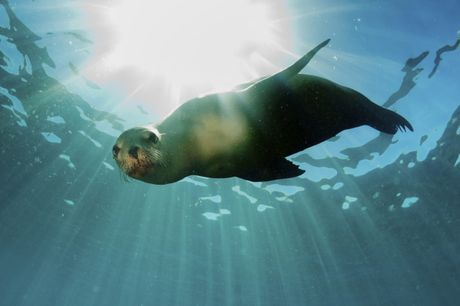 A curious seal off the Galapagos Islands. Photo: Contributed