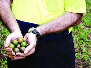 Nut growers keen to keep learning at industry workshops