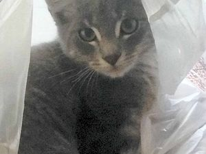 Family mourns pet cat mauled by dogs