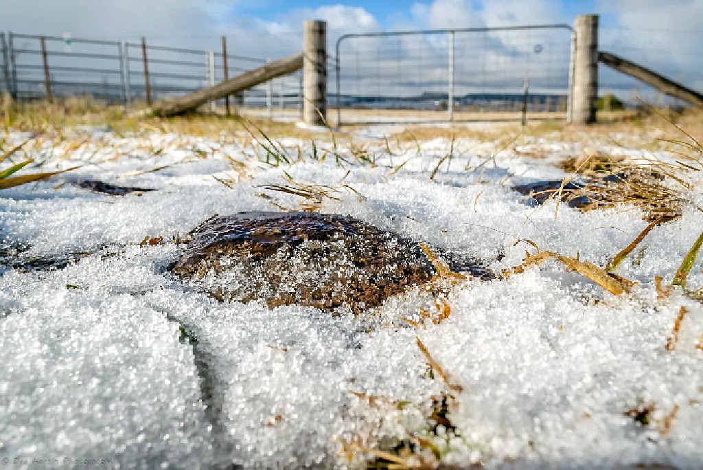 WINTER'S HERE: Dee Hartin's photos of snow at Glenn Innes.