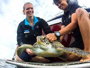 VIDEO: Seeya Stormy! Turtle released back into ocean