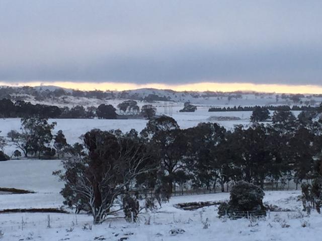 SNOW FIELDS: Snow over the fields near Tenterfield.