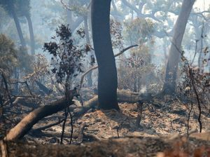 Morayfield bushfire under control