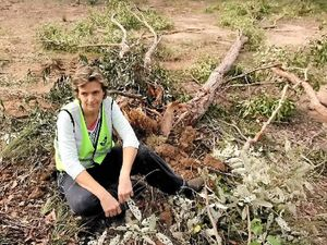 Another acre of declared koala habitat cleared