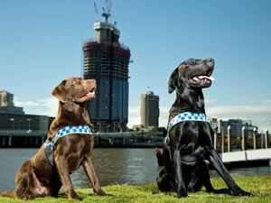 PICTURES: Crime fighting canines join Queensland Police