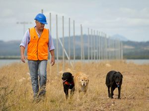 Surveillance force back for fire ant detection searches