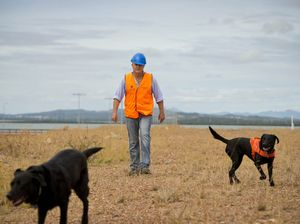 Dogs help sniff out fire ants
