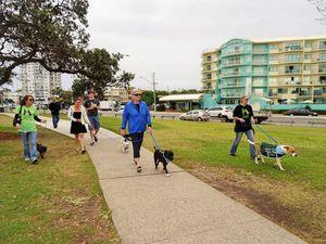 SCARS dog walking day
