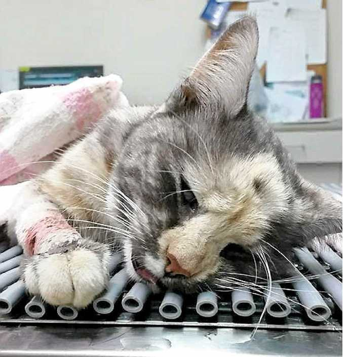 HEART WRENCHING: Baby had to be euthanised after she was allegedly found in a trap that left her with a broken leg and shattered paw.