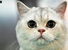 It's world cat day on Saturday.