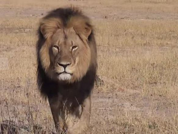 The world mourned Cecil the lion when he was killed by a trophy hunter.