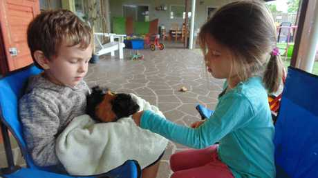 PRIZED PET: Green Beginnings Child Centre pupils Reeve Williams (left) and Neena Fowler nurse Anna the guinea pig during happier times.