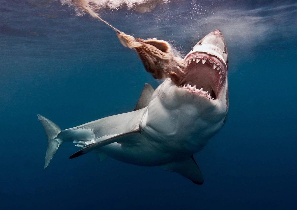 There is an app to avoid shark attacks. Yes, really.