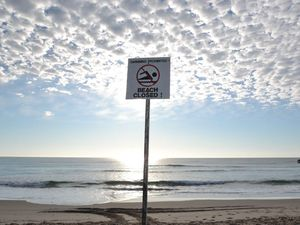 Shark nets on way to North Coast after attack