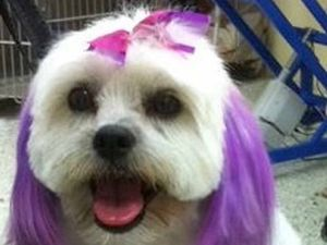 GALLERY: Leanne's dog cuts and dyes get CQ tongues wagging