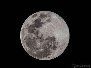 Blue Moon reader photos, Sunshine Coast