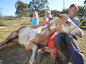 Owner believes sick horse had reaction to hendra vaccination