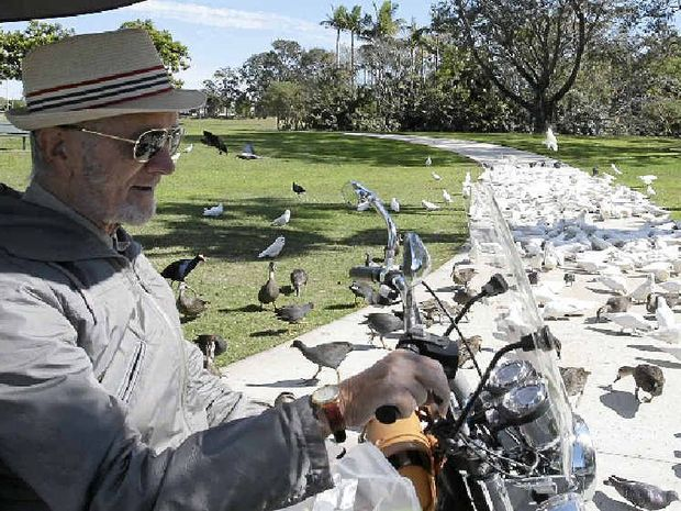 FEATHERED FRIENDS: Leo feeds the birds at Centenary Lakes in Caboolture three times a week. Experts say drought has caused the corella population to boom.