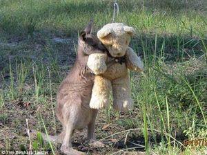 For Doodlebug, fame was as close as a teddy bear's hug