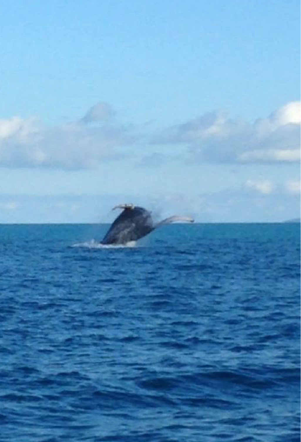 SPOTTED: Jeremy Rocko Kenningale sent in this photo of a whale near Seaforth. This is just one of the whales spotted in recent times.