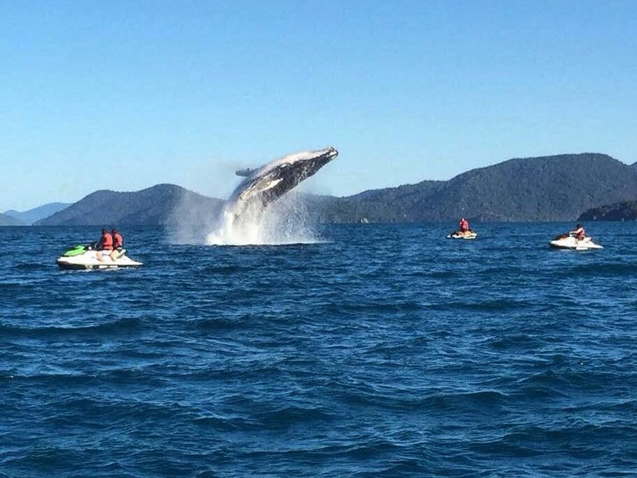 Whitsunday Jetski Tours shared this photo of a whale on social media.