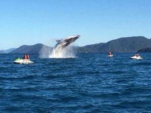 Whale shows off to jetski group near Daydream Island