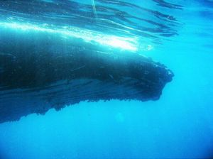 Whale swim company hits out at tow claims