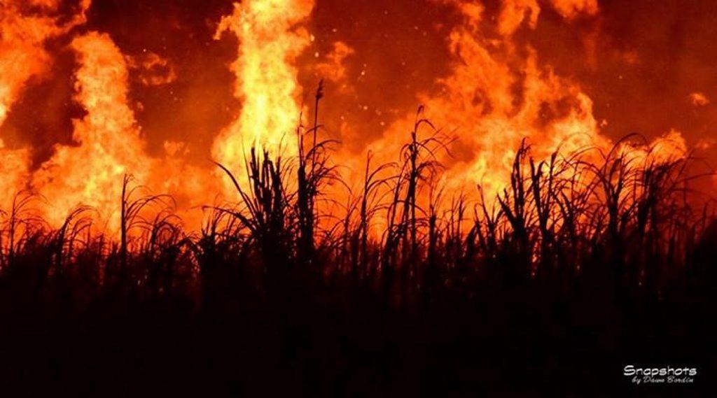 Dawn Bordin's cane fire photo