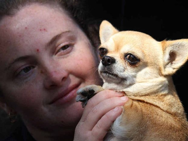 TOP DOG: Toowoomba's Amanda Dunn holds GG, who she is helping to show at the Ekka.
