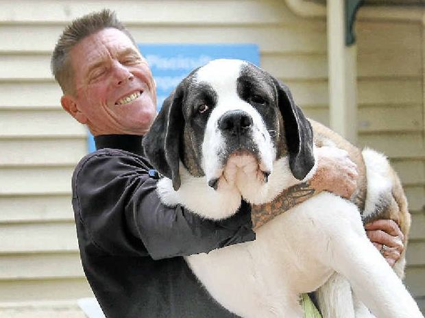 A MAN'S BEST FRIEND: Ipswich's Wayne Carter and St Bernard puppy Marilyn at the Ekka.