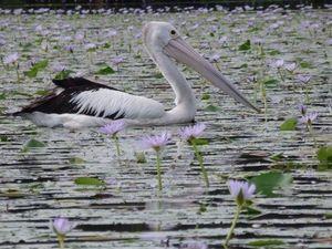 Kayak trip a peaceful getaway
