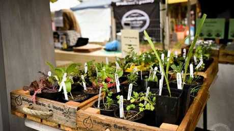 Toowoomba's farmers markets are happening again. Photo Contributed