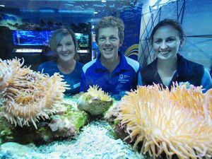 Marine life in the spotlight for National Science Week