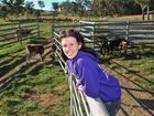 Rescue calves saved from plate to go to paddock