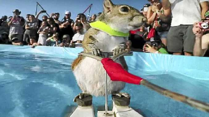 Twiggy the waterskiing squirrel in a scene from Pets Make You Laugh Out Loud.