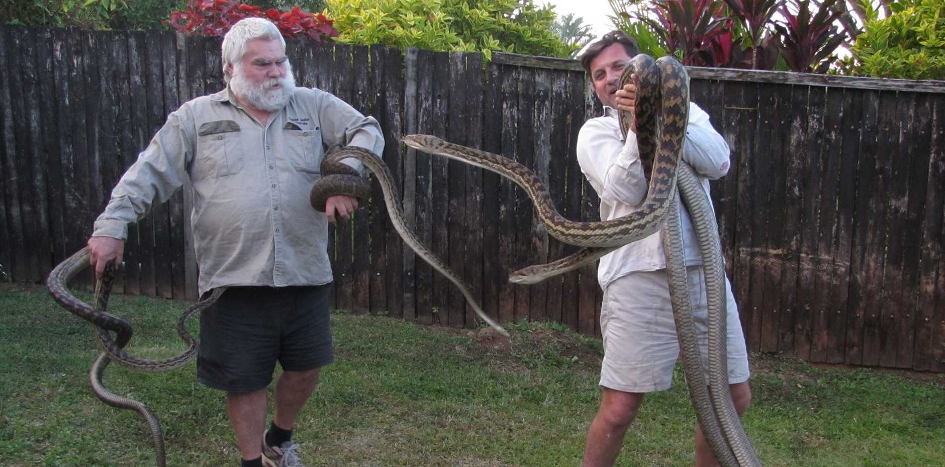 Some of the snakes found in a Cairns roof