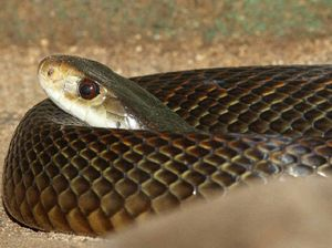Keep away from snakes in mating season