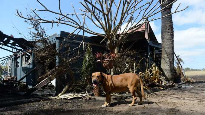 HERO DOG: DJ alerted his owners Chris Ingham and Kathy Kington to the fire inside their Gin Gin road home southwest of Sharon. Photo: Mike Knott / NewsMail